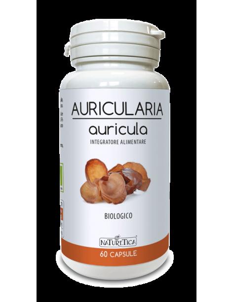 Auricularia - auricula - Naturetica