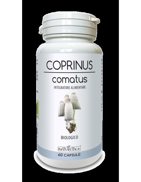 Coprinus Comatus - Naturetica